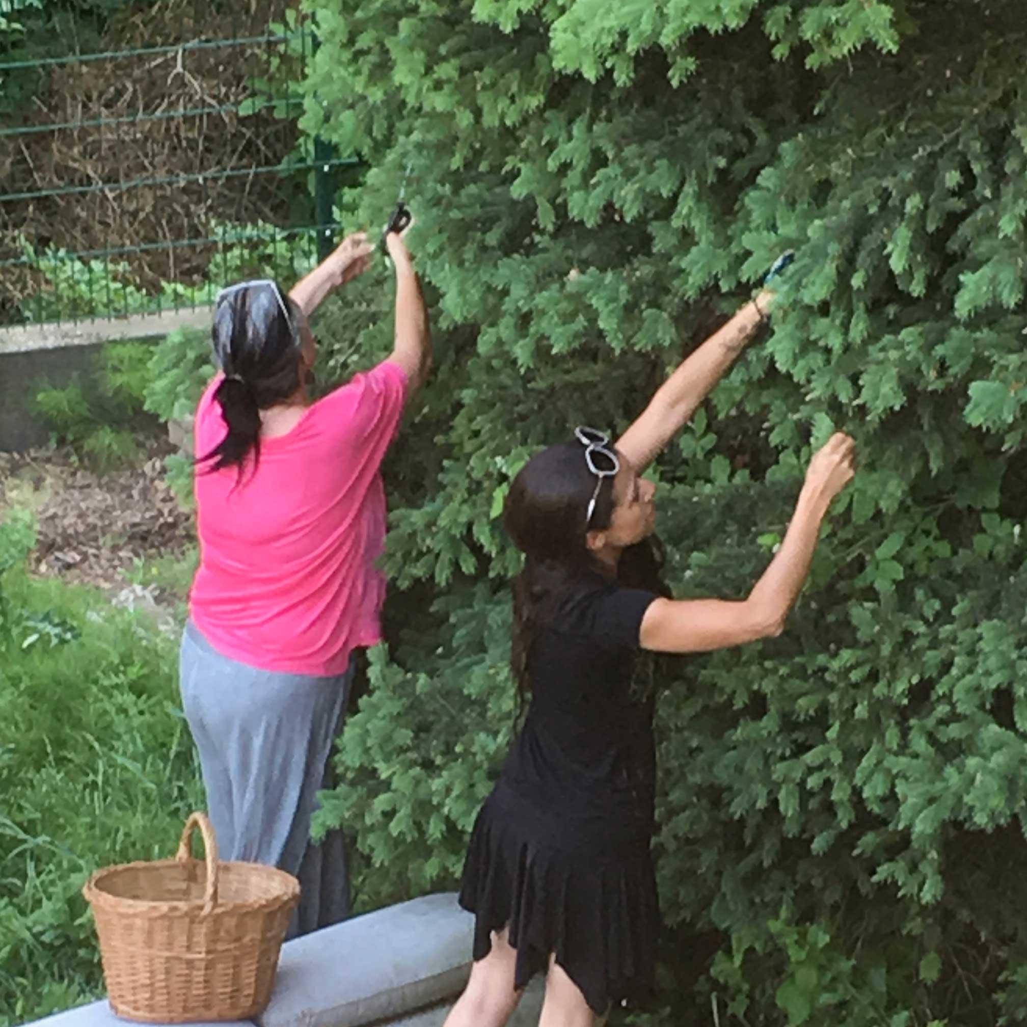 Foto: Alexa und Andrea beim Pflücken