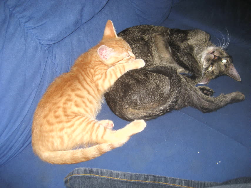Entspannte Katzen